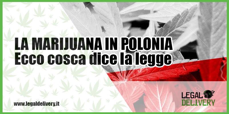 In polonia la cannabis legale legaldelivery blog for Domicilio legale
